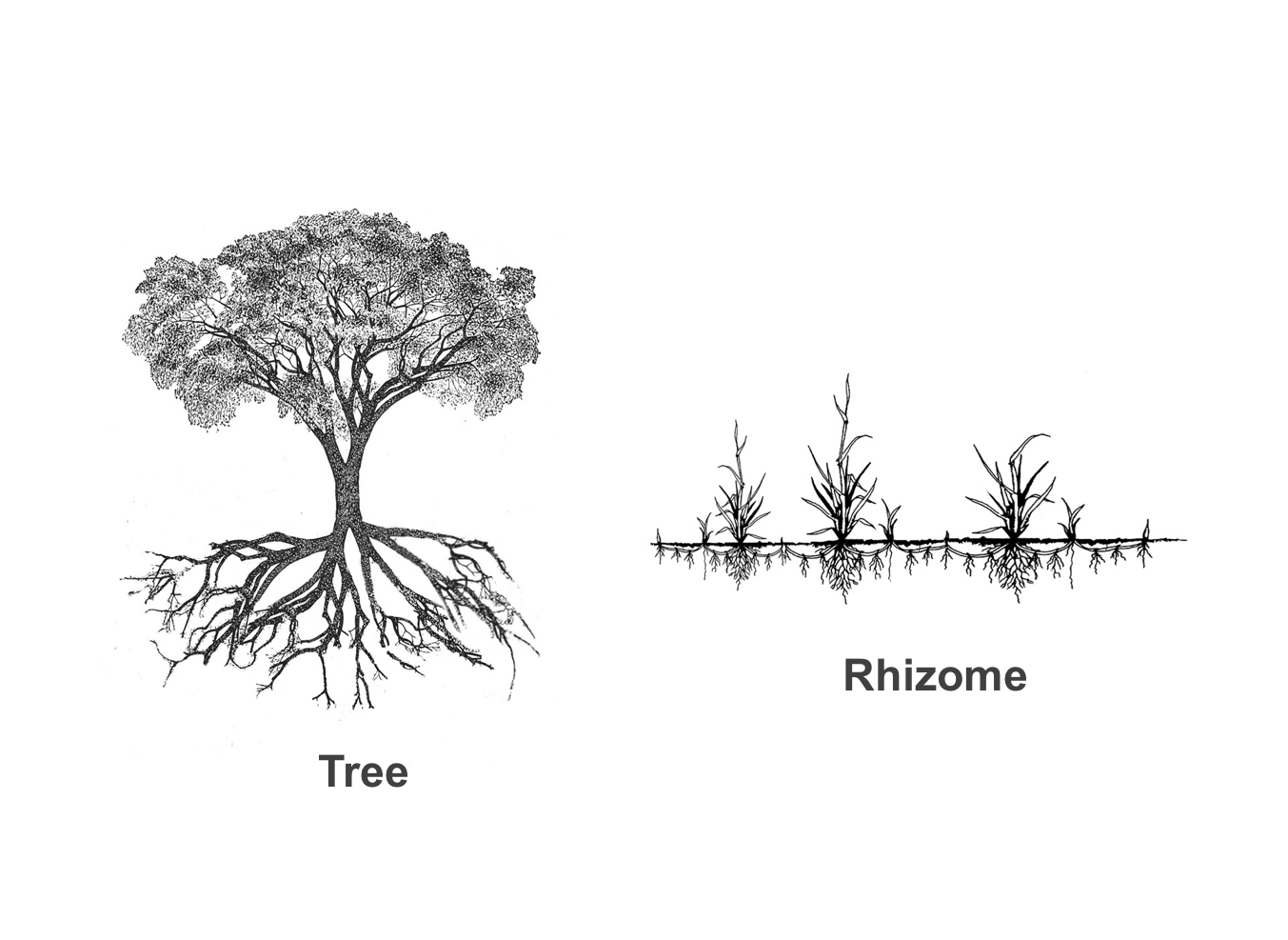 """""""The Rhizome"""" - an American Translation 